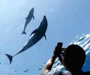 a-man-takes-photos-of-a-baby-dolphin-and-his