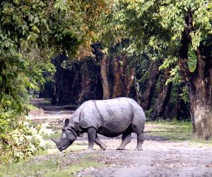 Assam's Kaziranga National Park opens for 2017-18 tourist season