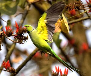 Parrot Perches On A Tree