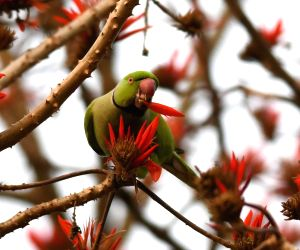 A parrot sits among Roluos flowers