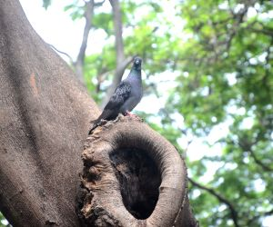 Pigeon Perched On A Tree