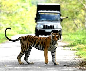 Tiger spotted