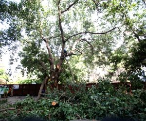 Tree being cut for Metro project