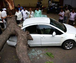 : New Delhi: Storm hits Delhi