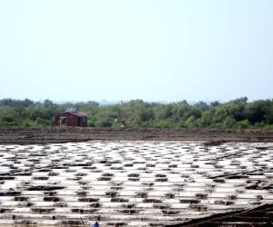 File Photos: Salt pans