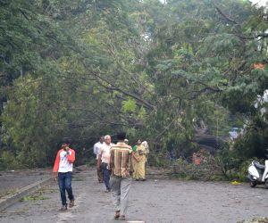 Heavy rains uproot trees, electric poles