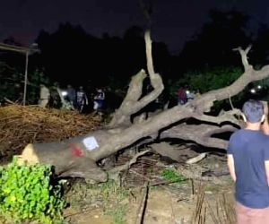 Dia, Farhan trolled after they attack govt for cutting trees
