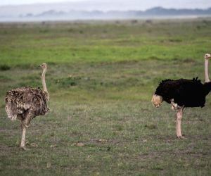 KENYA AMBOSELI ANIMAL ENVIRONMENT
