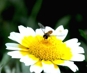 A bee busy collecting nectar