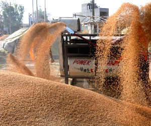 Amritsar grain market