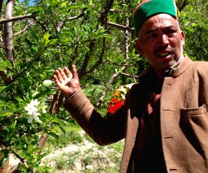 How climate change is affecting Kinnaur's apples - and more