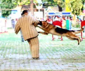 IITF - 2015  - Dog Show