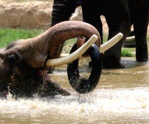 Hot Day - Elephants beta the heat at Delhi zoo