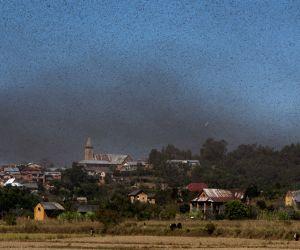 Locusts fly across Ilaka Centre Village