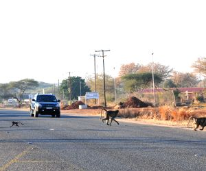BOTSWANA WILDLIFE ROAD