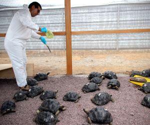 ECUADOR BALTRA ISLAND PERU GIANT TORTOISES