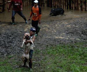 INDONESIA-BANDUNG-TRADITIONAL ANIMAL GAMES
