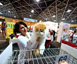 THAILAND BANGKOK CAT COMPETITION