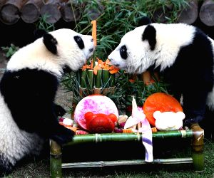 CHINA-SHANGHAI-PANDA CUBS-BIRTHDAY