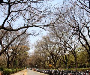 Cubbon Park during springs