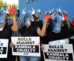 Protest against Buffalo and Bulls Kambala Races