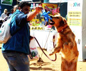 (110115) Bengaluru: Dog Show