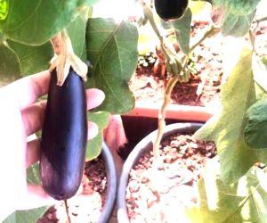 Lockdown diaries: Bhumi Pednekar grows homegrown veggies and fruits