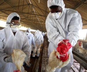 Czech Republic confirms second bird flu outbreak