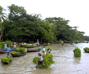 Floating plant market