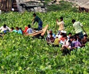 Hyacinth cover over Buriganga River