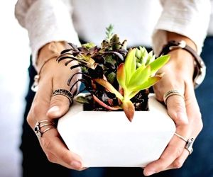 Bouquets are passe, gift a plant this Valentine's Day