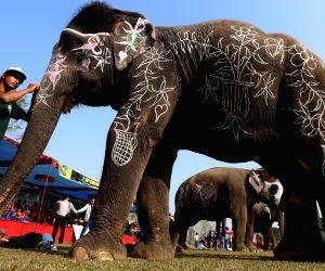 NEPAL CHITWAN ELEPHANT FESTIVAL