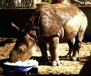 NEPAL-CHITWAN-RESCUED BABY RHINO