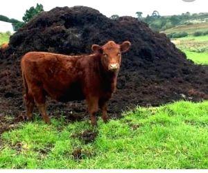 Himachal man sells cow to buy smartphone for kids' online studies
