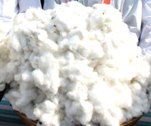 Worry in India as cotton prices take a hit in US-China trade war