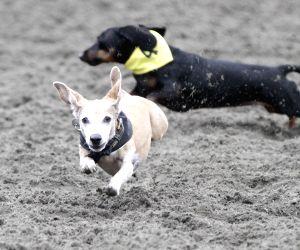 CANADA VANCOUVER DOG RACING