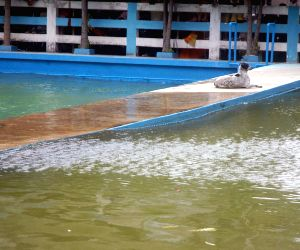 Dum Dum: Waves form in a swimming pool due to earthquake