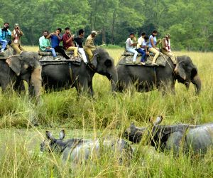 Morigaon (Assam): Pobitora Wildlife Sanctuary