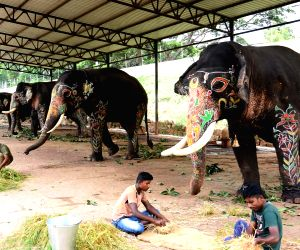 Mysuru (Karnataka): Elephants relax after Jamboo Savari