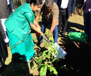 External Affairs Minister Sushma Swaraj plants a sapling during her visit to Phoenix Settlement Inanda in Durban, South Africa -  Mahatma Gandhi's residence during his stay in South Africa; ...