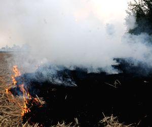 Farmers burn paddy stubble Punjab