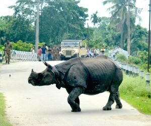 Rhino strays away from Kaziranga National Park
