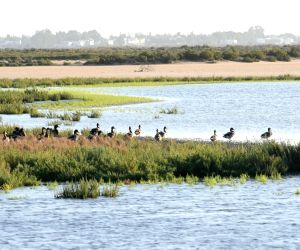 TUNISIA-GAMMARTH LAKE-BIRDS-MIGRATION