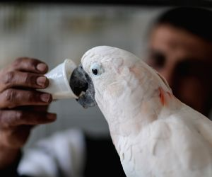 MIDEAST GAZA PARROT COFFEE