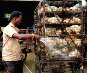 Delhi HC bans slaughter in Ghazipur Murga Mandi
