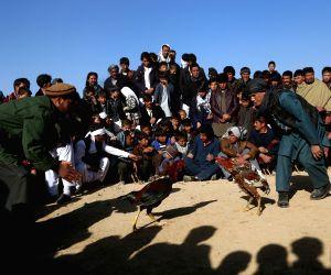 AFGHANISTAN GHAZNI COCK FIGHTING