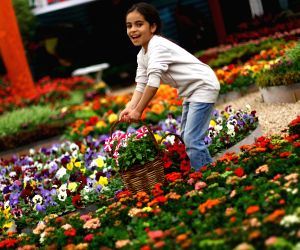 EGYPT GIZA EXHIBITION FLOWER