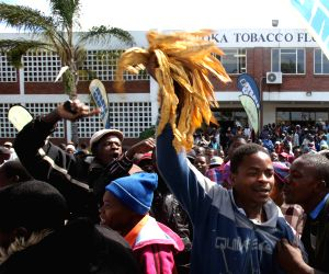ZIMBABWE HARARE TOBACCO PRODUCTION PROTEST