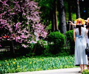 Heilongjiang Forest Botanical Garden in Harbin