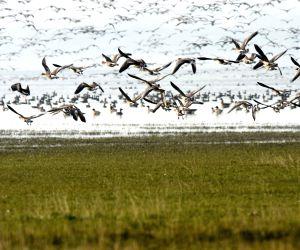 China Anhui Migratory Bird